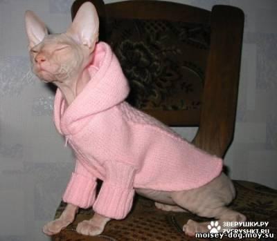 Как сделать одежду коту видео